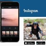 Как загрузить фото в Инстаграме с компьютера